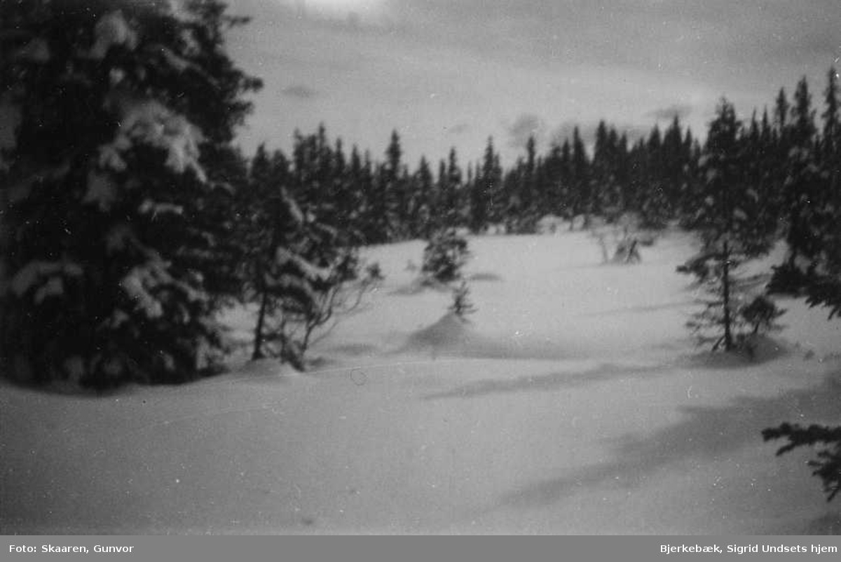 Landskap, skog, vinter