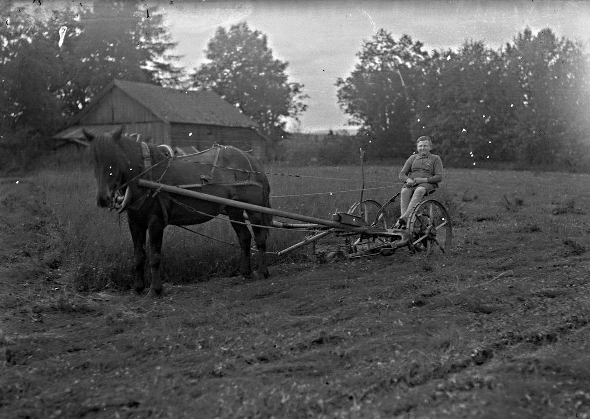 Fra stedet Perses på Eidsvoll Verk. Bjercke sittende på slåmaskin. Hesten heter Lilly. Den ble 30 år.