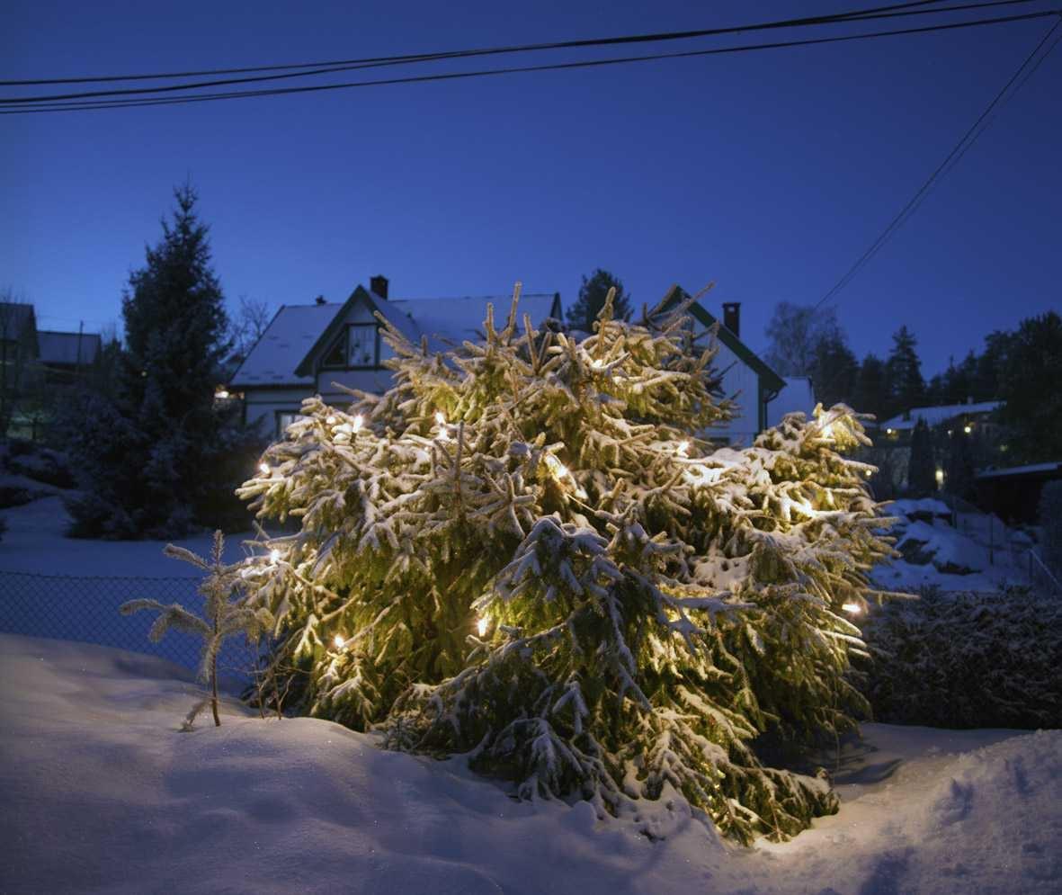 Julebelysning  Hvit julebelysning i lenke på klippet gran