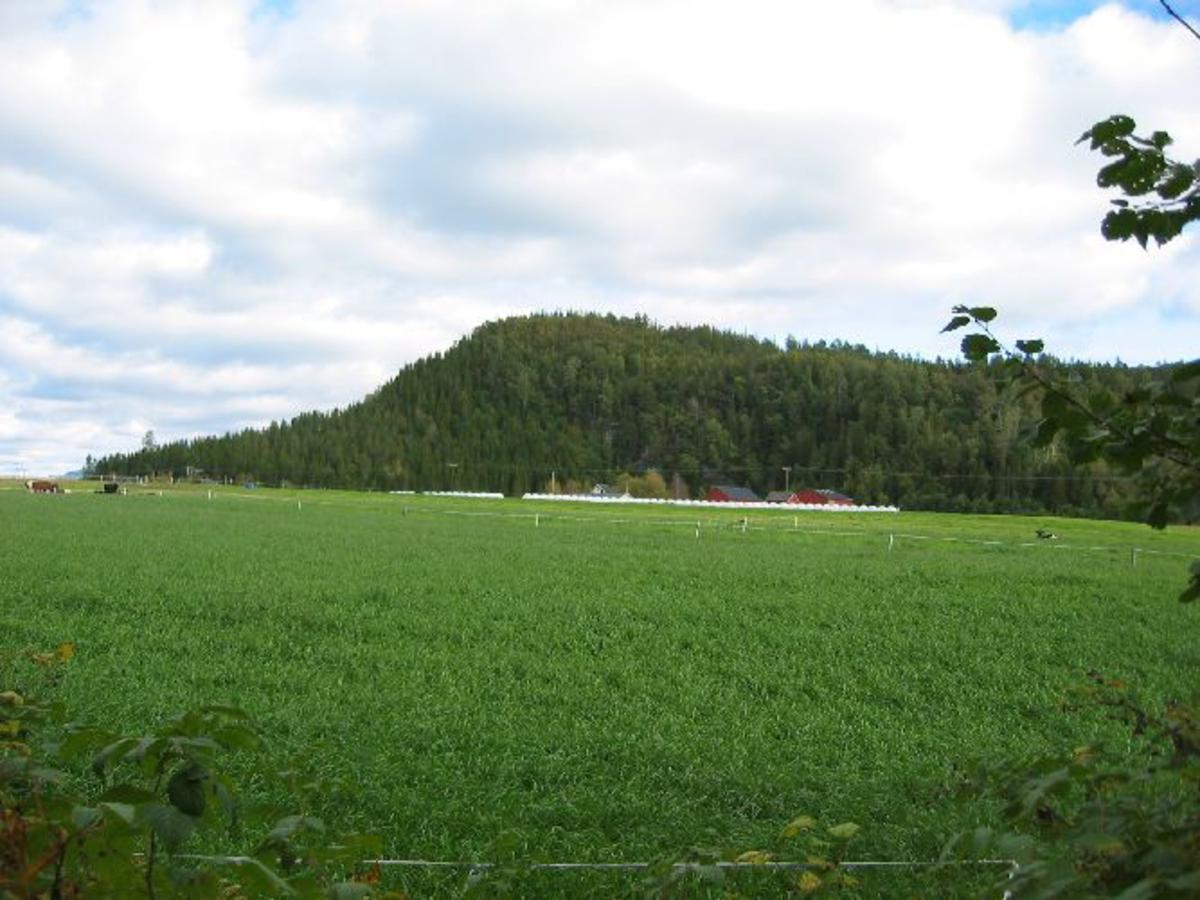 Forsvarsmurer rundt toppen av en høyde, den største bygdeborgen i det nordenfjellske Norge