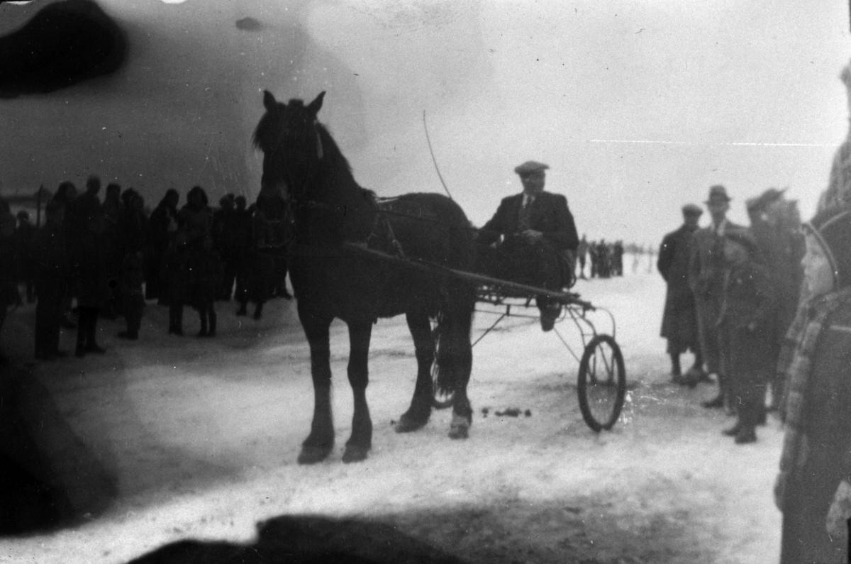 Hesten Biringen med sulky. Travløp på vinterføre. Tveiter, Stavsjø, Hedmark.