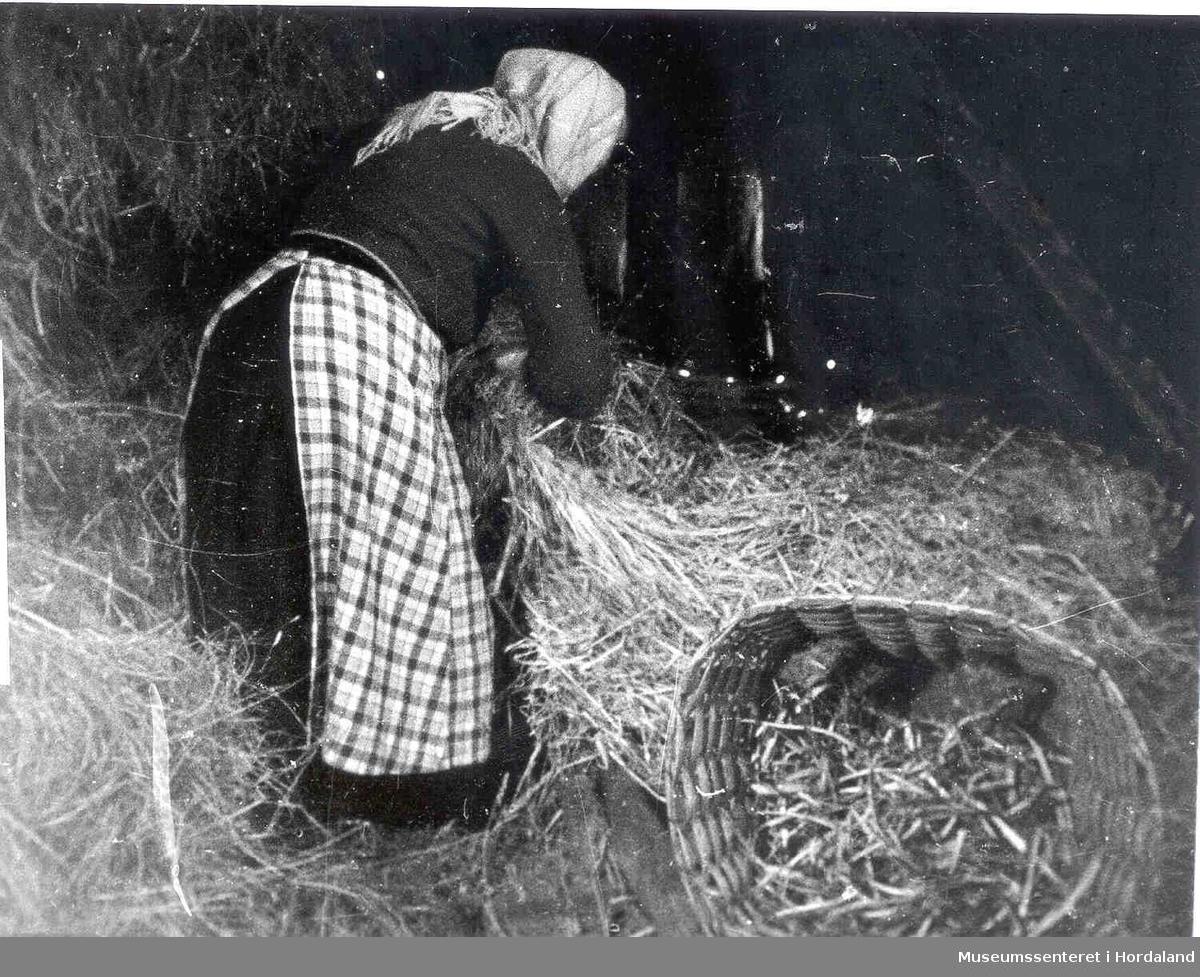 Kone som ristar halmen frå Halmstålen på Havrå