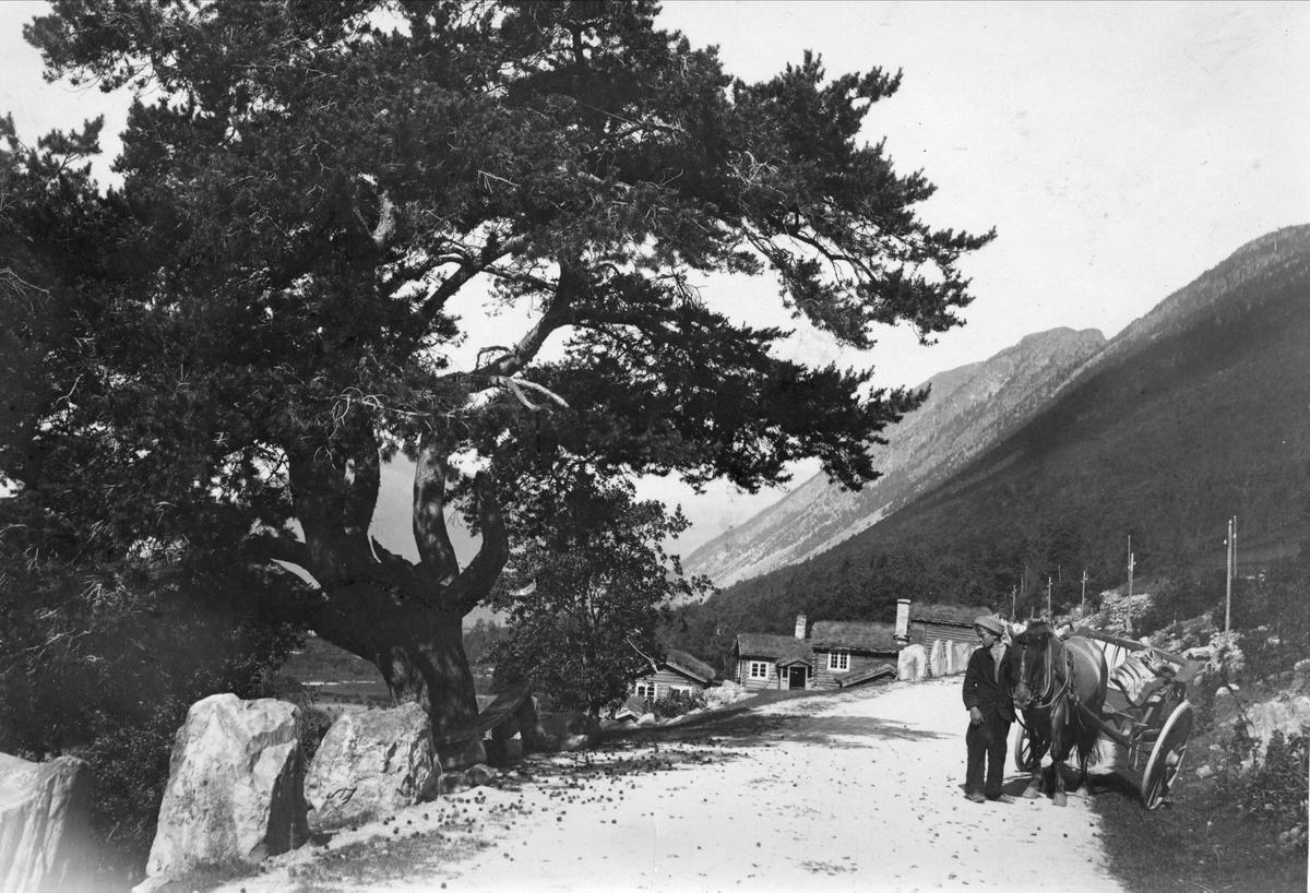 Veiparti med mann med hest og kjøretøy, ukjent sted. Serie tatt av Robert Collett (1842-1913), amatørfotograf og professor i zoologi.