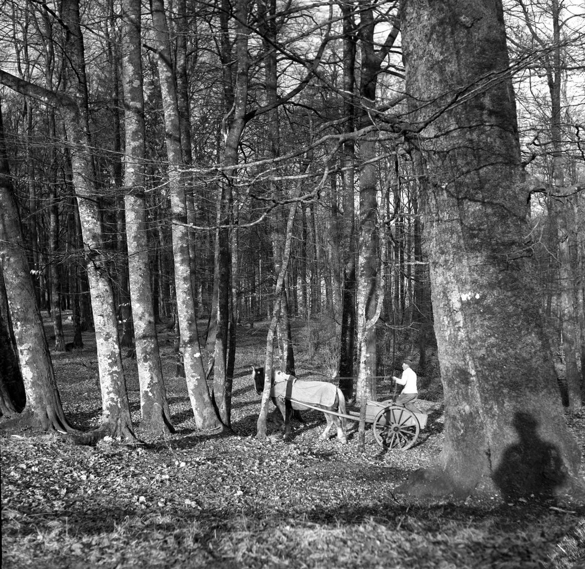Larvik by, 28.03.1953, fra Bøkeskogen.