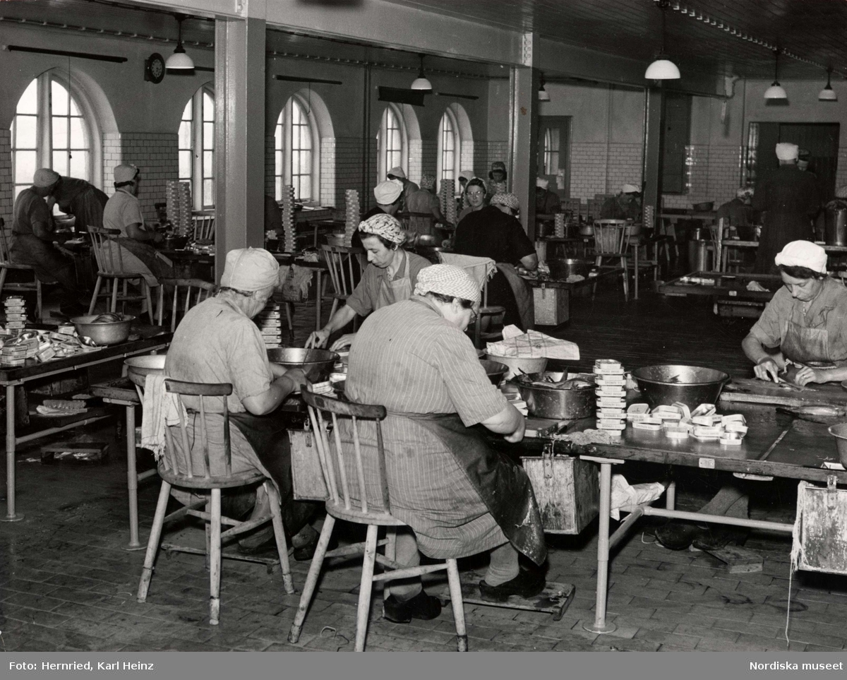 """Sveriges Förenade Konservfabriker, AB i Lysekil, Bohuslän. Bolaget  grundades 1898 och förfogar över åtta fabriker. I Lysekil har man specialiserat sig på enbart sill- och ansjovisinläggningar samt kryddning och sockersaltning av skarpsill och sill. Produkterna går under namnet """"Fyrtornet"""". Kvinnor sitter och rensar fisk och skär den i gaffelbitar innan de lägger den på burk"""