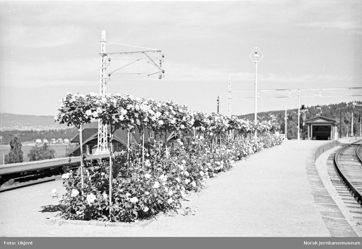 Roser på Ljan stasjon