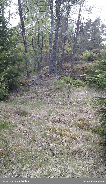Platsen för torpet Bergmyr där en resande vid namn Abel och hans hustru bodde i början av 1900-talet. Efter att huset övergivits och rivits var här åker några årtionden vilken sedan planterats med gran. Huset ska ha legat invid berget. Foto: Kristina Lindholm, Bohusläns museum.