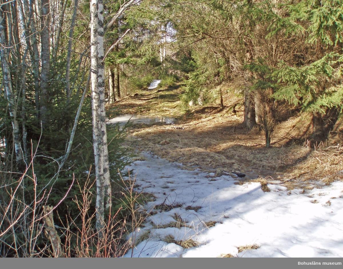 Den gamla landsvägen mot lägerplatsen vid Ulveklev. Foto: Kristina Lindholm, Bohusläns museum.