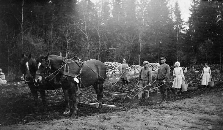 """Enligt medföljande text: """"Potatissättninge på nyodling i Lillevatten år 1924. Fr v Berta, Erik, George, Hulda (4 syskon Gustafsson) näst sista kvinnan är Märta, Eriks hustru""""."""