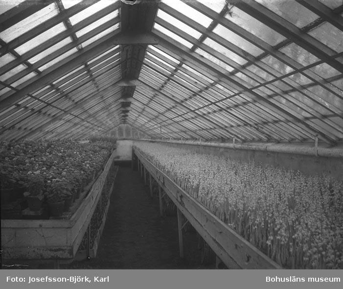 Växthusinteriör, Trädgårdföreningen i Göteborg