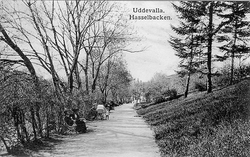 """Tryckt text på vykortets framsida: """"Uddevalla. Hasselbacken"""".    ::"""