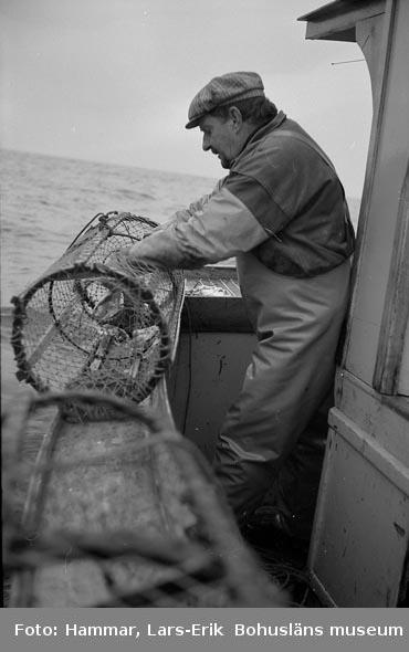 Hummerfiske sydväst om Mollösund i oktober 1978