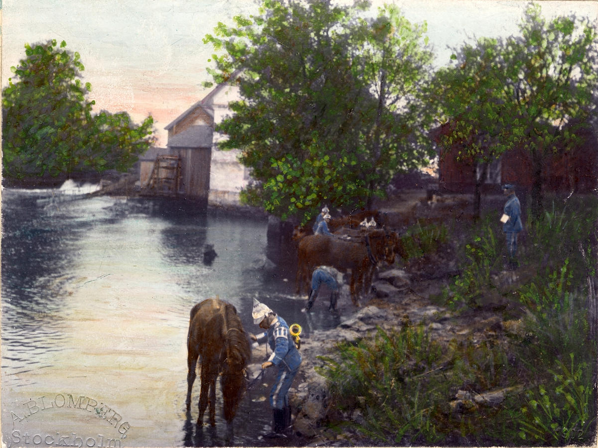 Soldater ur Livgardet till häst K 1 rastar sina hästar vid vattendrag. Soldaterna iförda uniform m/ä. En soldat bär signalhorn på ryggen. Färglagt foto från 1902.