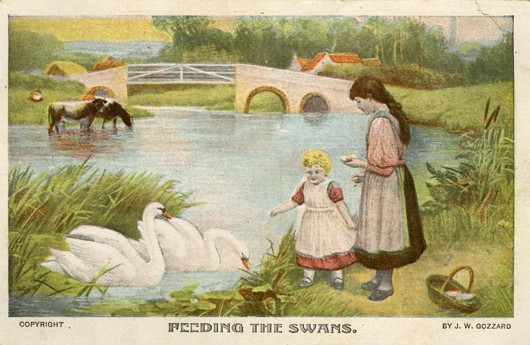 Notering på kortet: Feeding the swans.