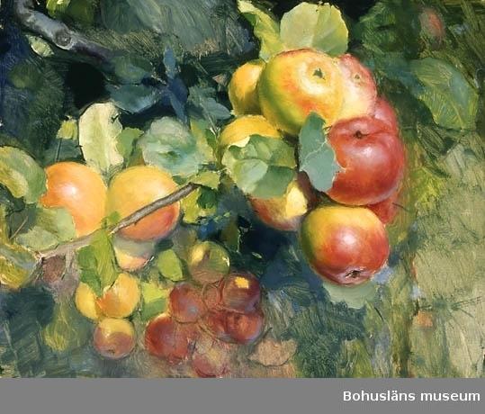 Gren med äpplen