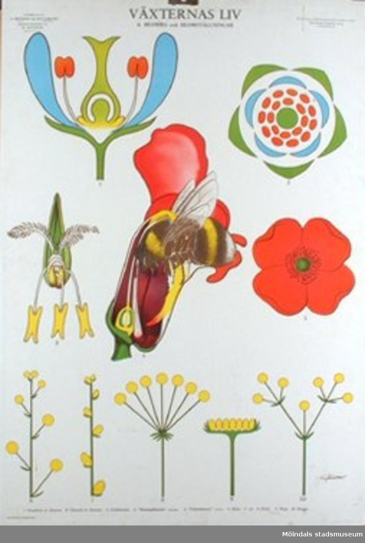 :1: Växternas liv. Rotens, stammens och bladets byggnad.:2: Växternas liv. Stammen.:3: Växternas liv. Bladet.:4: Växternas liv. Blomma och blomställning.:5: Växternas liv. Pollination och befruktning.:6: Växternas liv. Frukt, fröspridning och groning.:7: Växternas liv. Profiler genom svenska växtsamhällen.