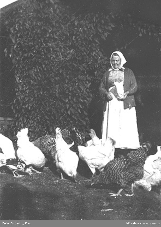 Josefina Andersson matar sina höns, 1925.