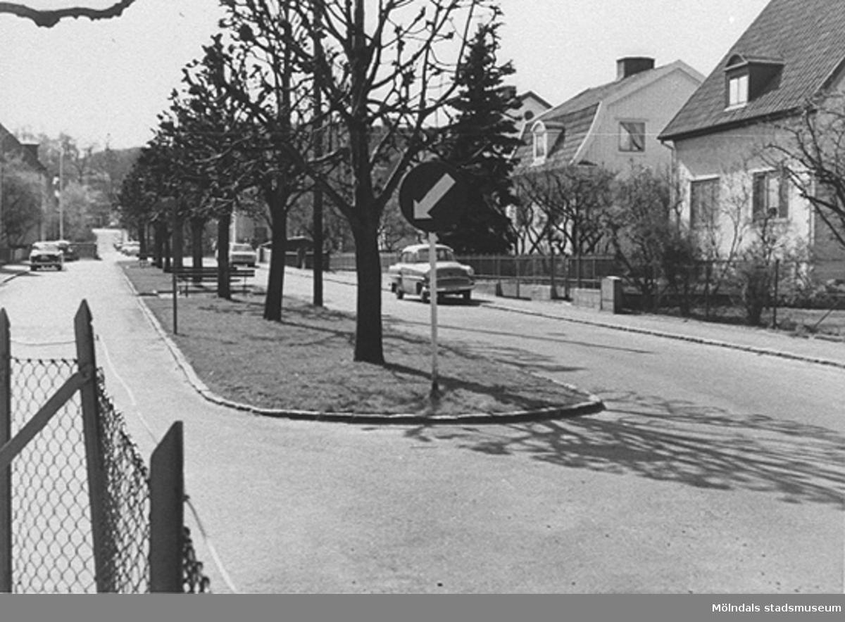 Man ser västra delen av Broslättsgatan med trädraden mitt i gatan.