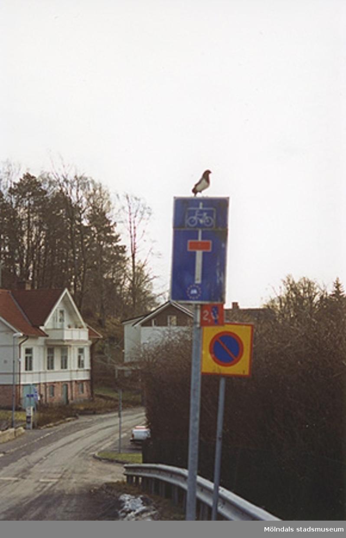 Skyltar mittemot gamla sjukstugan, f.d polishuset och där Mölndals museum tidigare låg (1986-2002), Norra Forsåkersgatan 19 år 2001. På en av skyltarna sitter en fågel. Den vita byggnaden till vänster ligger på Norra Forsåkersgatan 21.