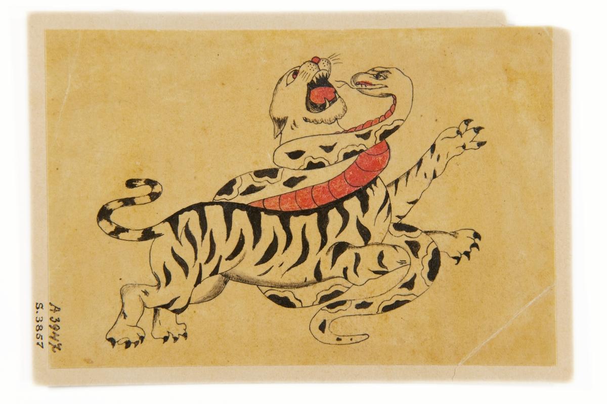 """Tatueringsförlaga. En tiger stridande med en orm.  """"Ett kampmotiv mellan två kraftdjur. Tigern kan visualisera det exotiska. Kanske ville bäraren låna lite av egenskaperna hos det här djuret. Det kan vara ett alter ego. Tigern kan symbolisera kraft, gnista och kämpaglöd, men också rovlystnad och passion. Det kan också uttrycka kärlek till naturen. Ormen kan tolkas på flera sätt. Den ses ofta som ett otäckt och hotfullt väsen. Den kan symbolisera ormen i paradiset eller det manliga könsorganet. Både ormen och örnen kan vara symboler för manlighet.""""  Text från appen """"Tatuera dig med Sjöhistoriska"""" som gjordes i samband med utställningen Tro, hopp och kärlek 2012."""