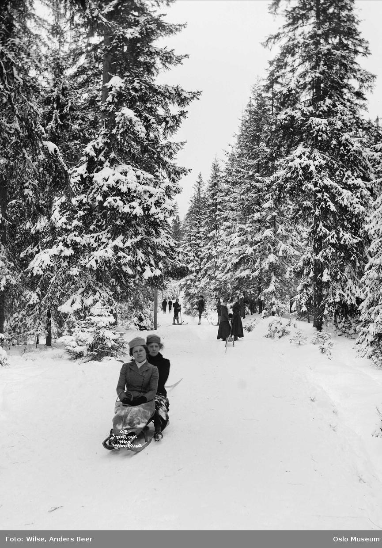 kvinner2, kjelke, aking, skiløpere, granskog, snø