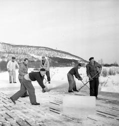 Isskjæring på Møkkelandsvannet, 1954.