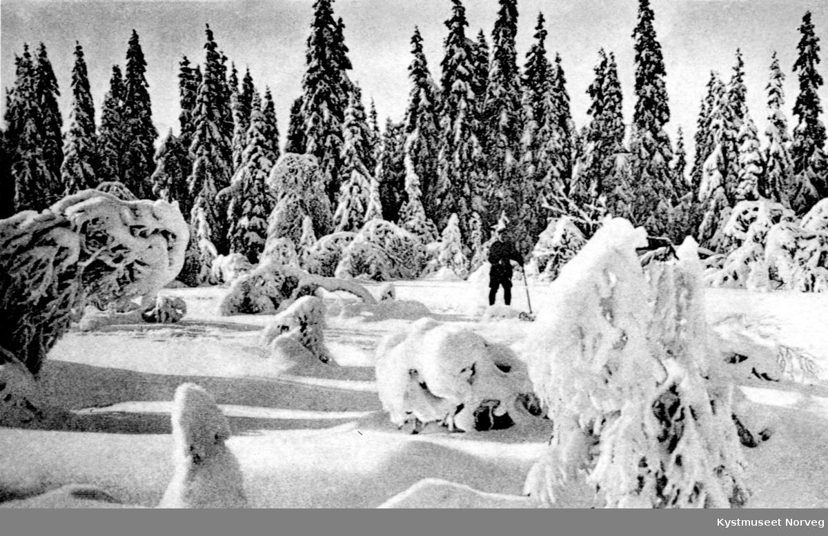 Vinterlandskap fra ukjent sted