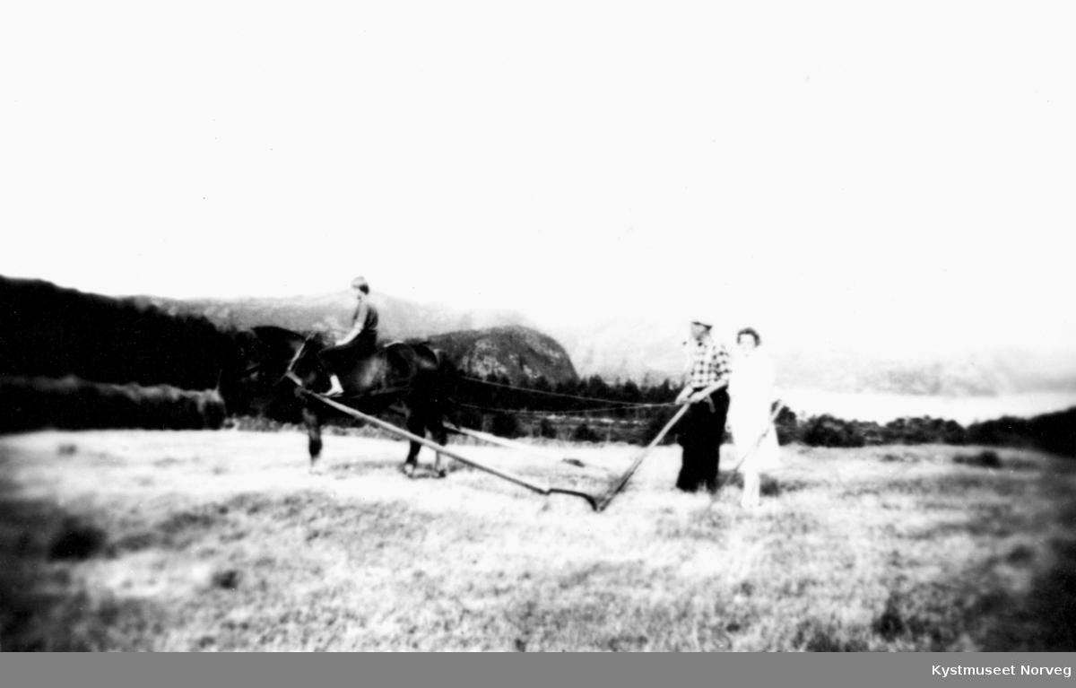 Thorhild Wennevik på hesten ved sleperiva står Helga og Thomas Wennevik? på småbruket Åsly ved Kolvereid