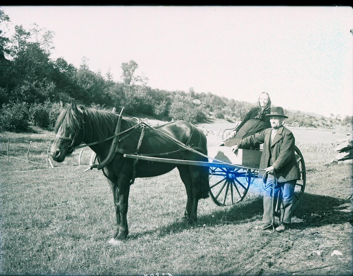 Daniel Aksnæs og frue med hest og kjerre