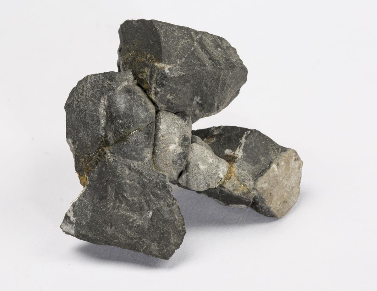 Fossil SNEGLEHUS, ORDOVICIUM