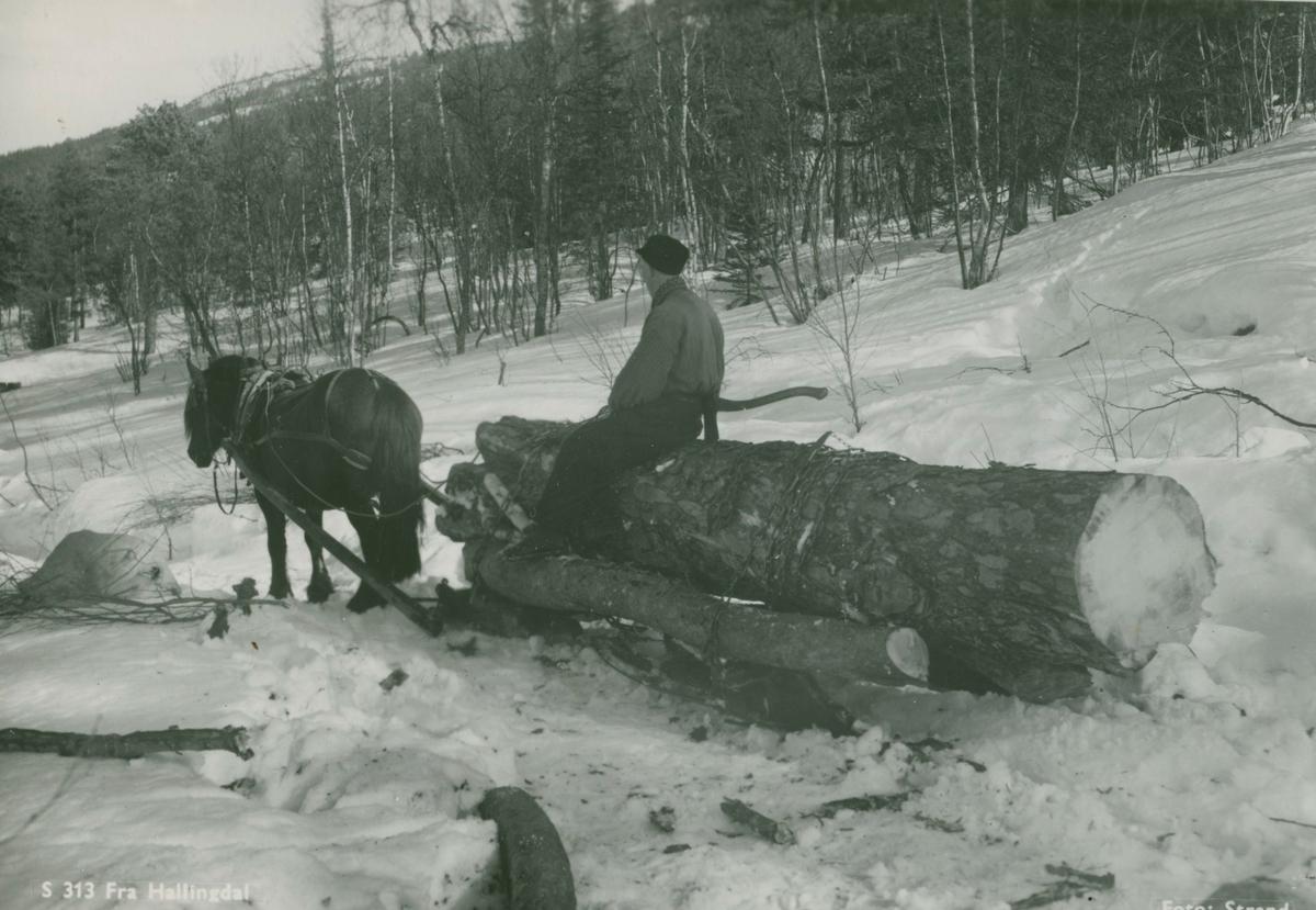 Tømmerkjøring i Hallingdal