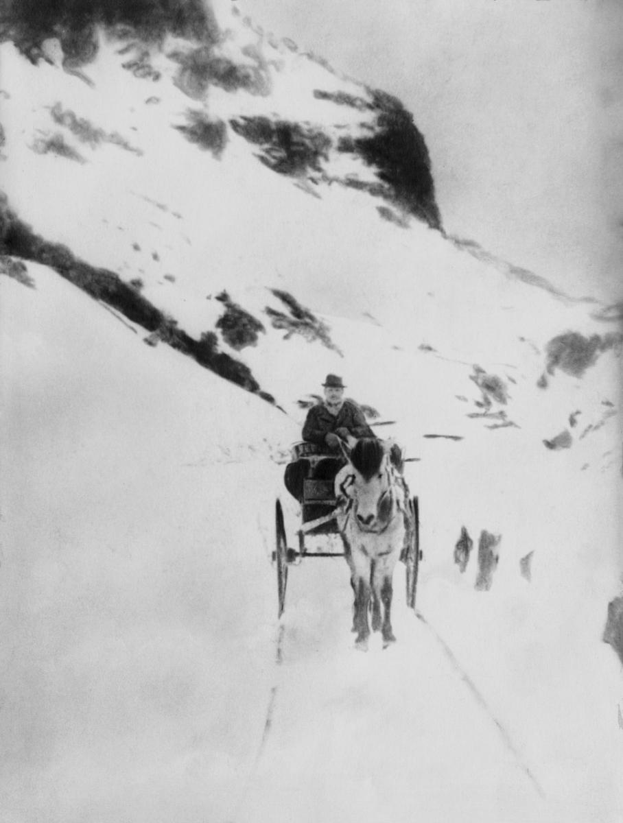 transport, hest, vogn to hjul, postfører, snø, Seljestadjuvet