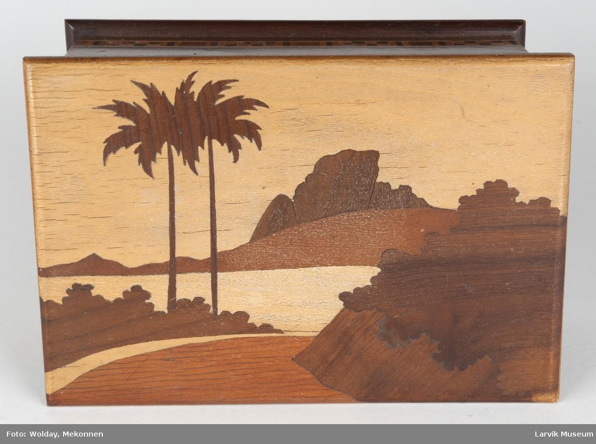 Motiv  med palmer og landskap