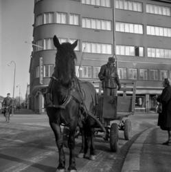 Hästar i Örebro.15 februari 1960