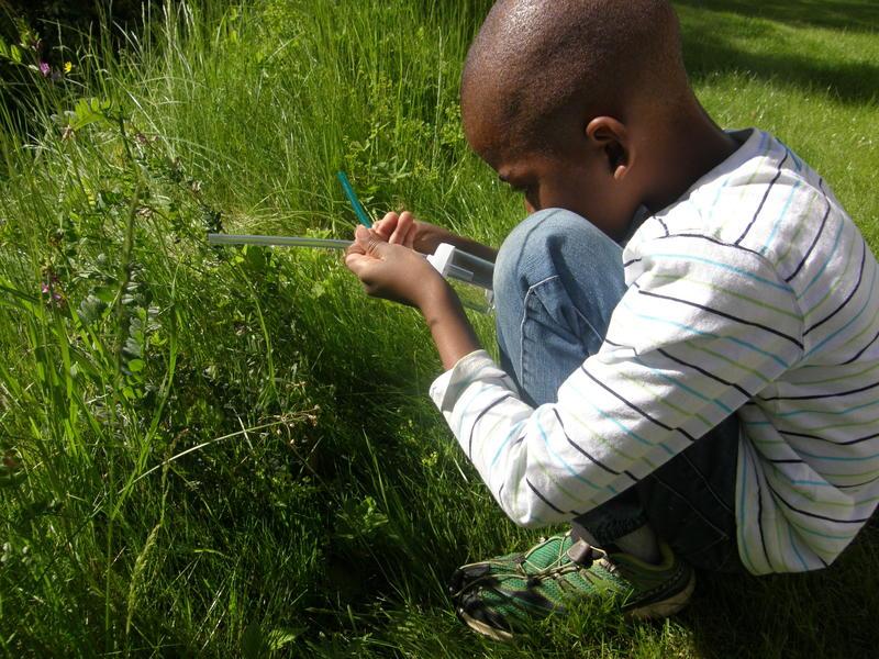 Foto av en gutt som ser etter insekter på land