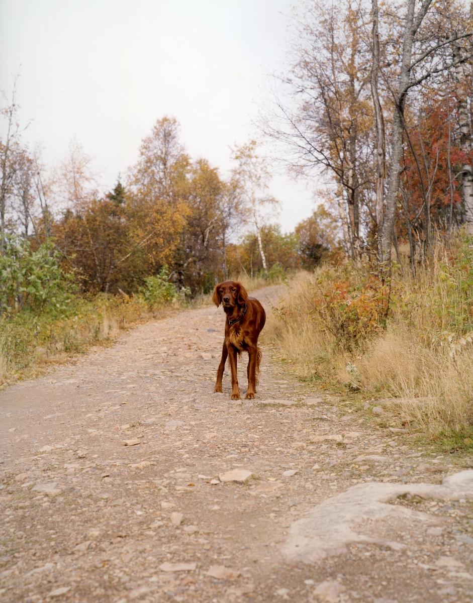 Verket består av to fotografier som viser samme utsnitt av et landskap, men hvor på det ene også viser en hund. Hunden er kunstnerens egen og har avbildet det samme landskapet før og etter dens død.