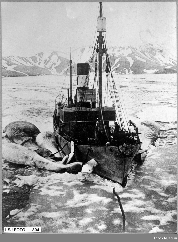 Hvalbåt har fanget fire hval