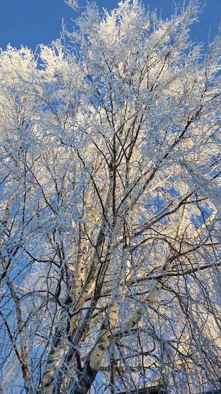 vinterbjrk.jpg
