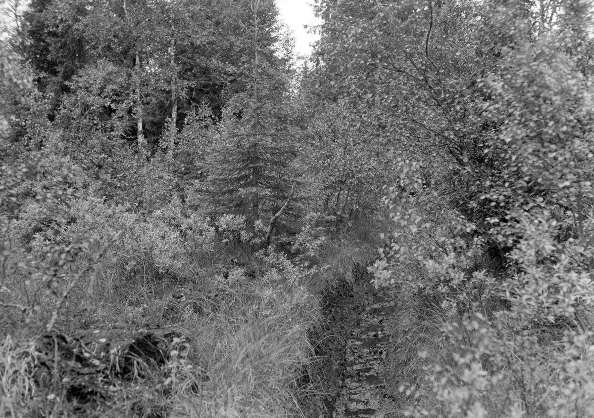 Løten Almenning. Grøfting, myr, skog.