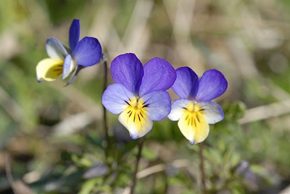 Blomster på Klevfos (Foto/Photo)