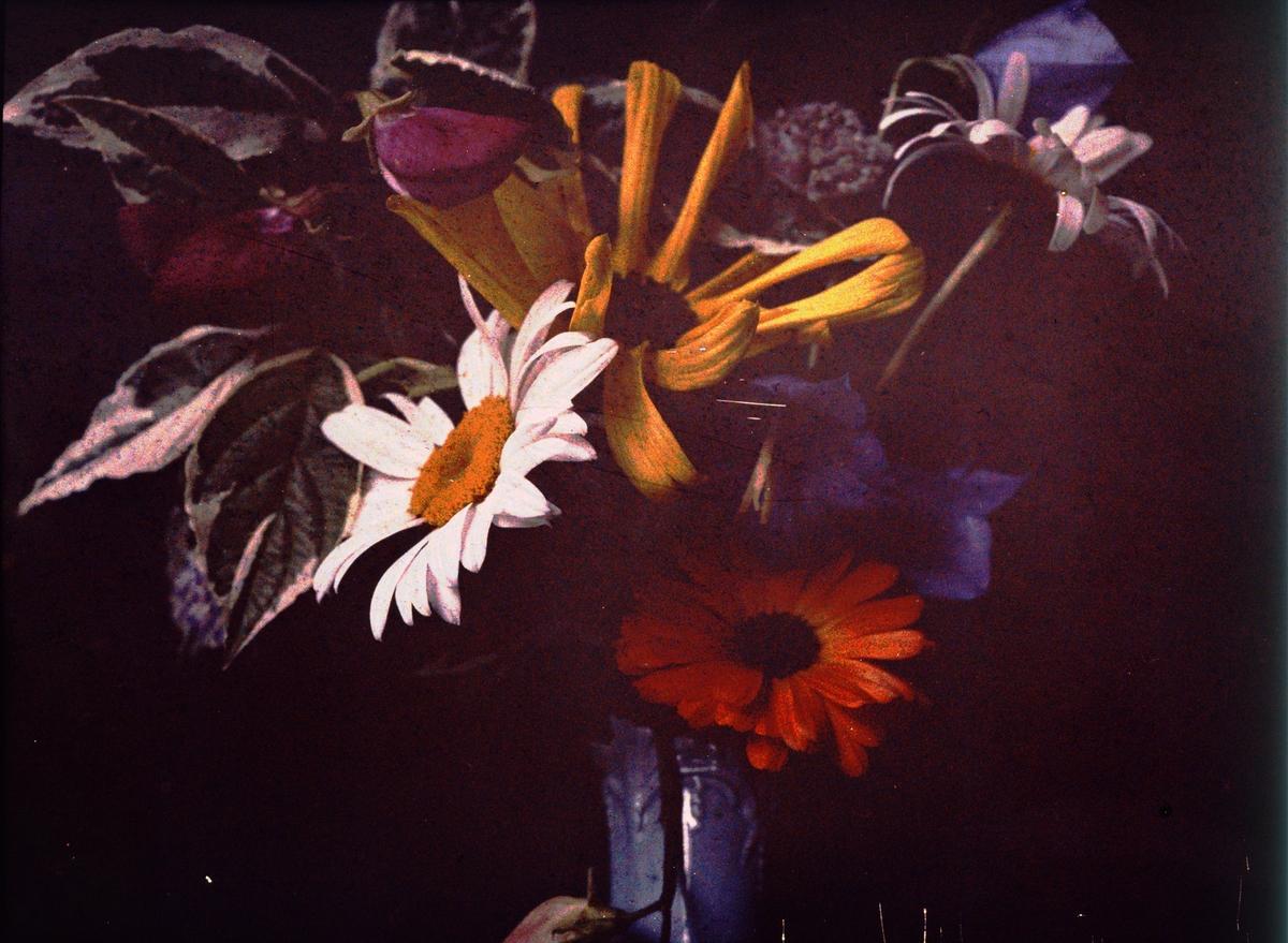 Lumières-autokrom. Bild av blommor (Haga trädgård).