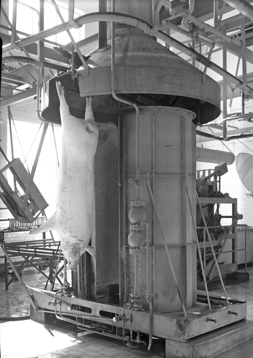 Gefleortens Slakteridjursförening Foto av brännugn   20 september 1938