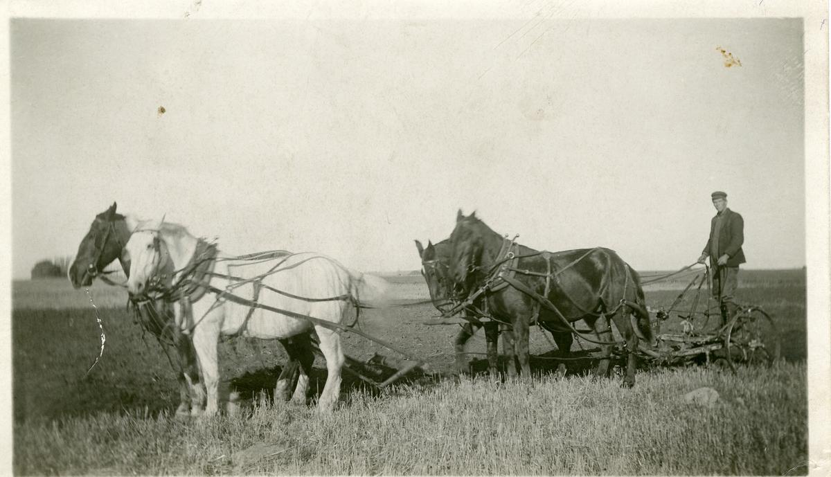 Pløying med hester på Dakota-prærien, først på 1900-tallet.