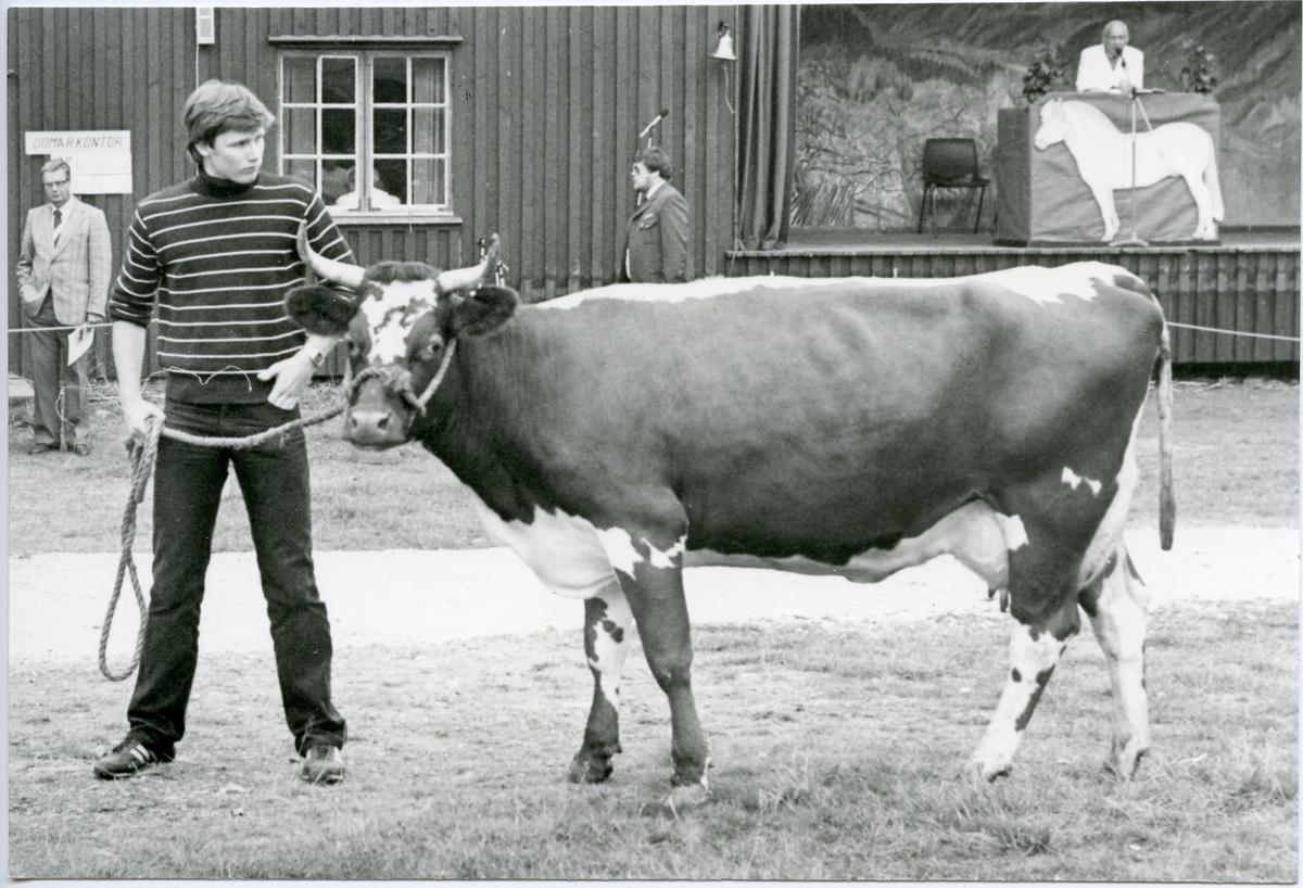Frå Dyrsku'n i Seljord 1957.