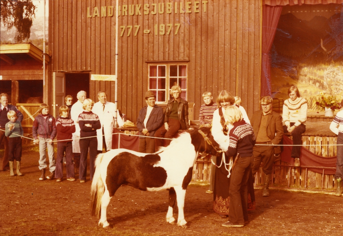 """Lars Gonsholt mønstrar shetlandsponnien """"Juno of Berry"""" som fekk 1. premie i 1977."""