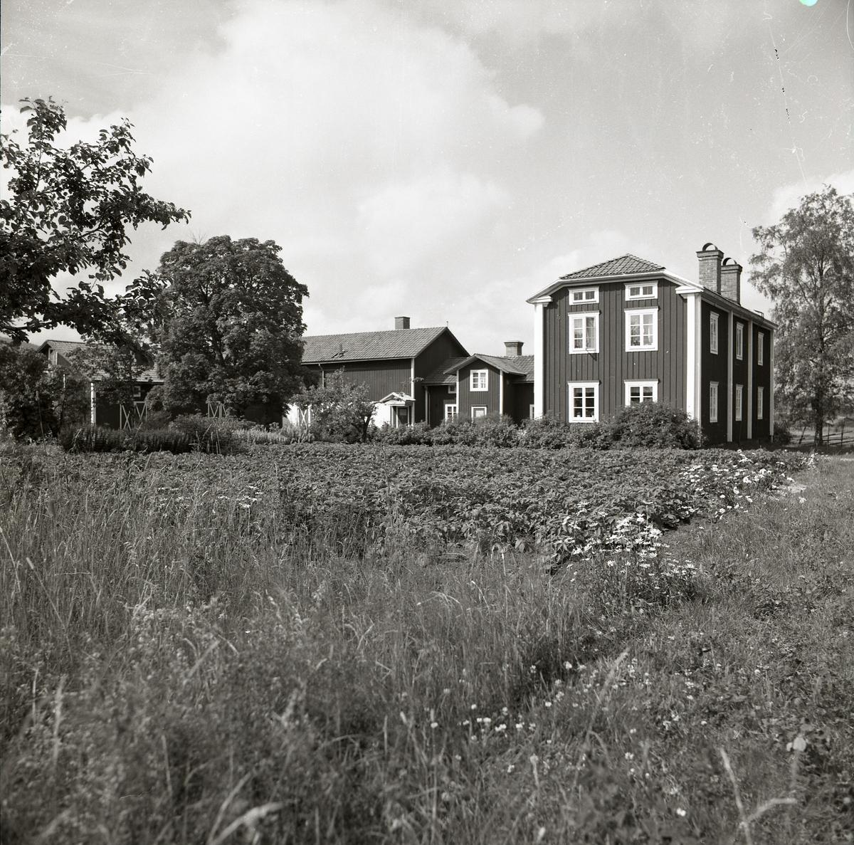 En vy över gården Sunnanåker har Hilding Mickelsson fotograferat i juli 1979. Åkermark med potatisodling, bostadshuset, uthusbyggnaderna och trädgården summerar upp gårdens huvuddrag.