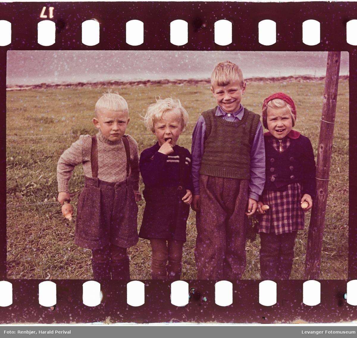 Fire barn på et jorde.