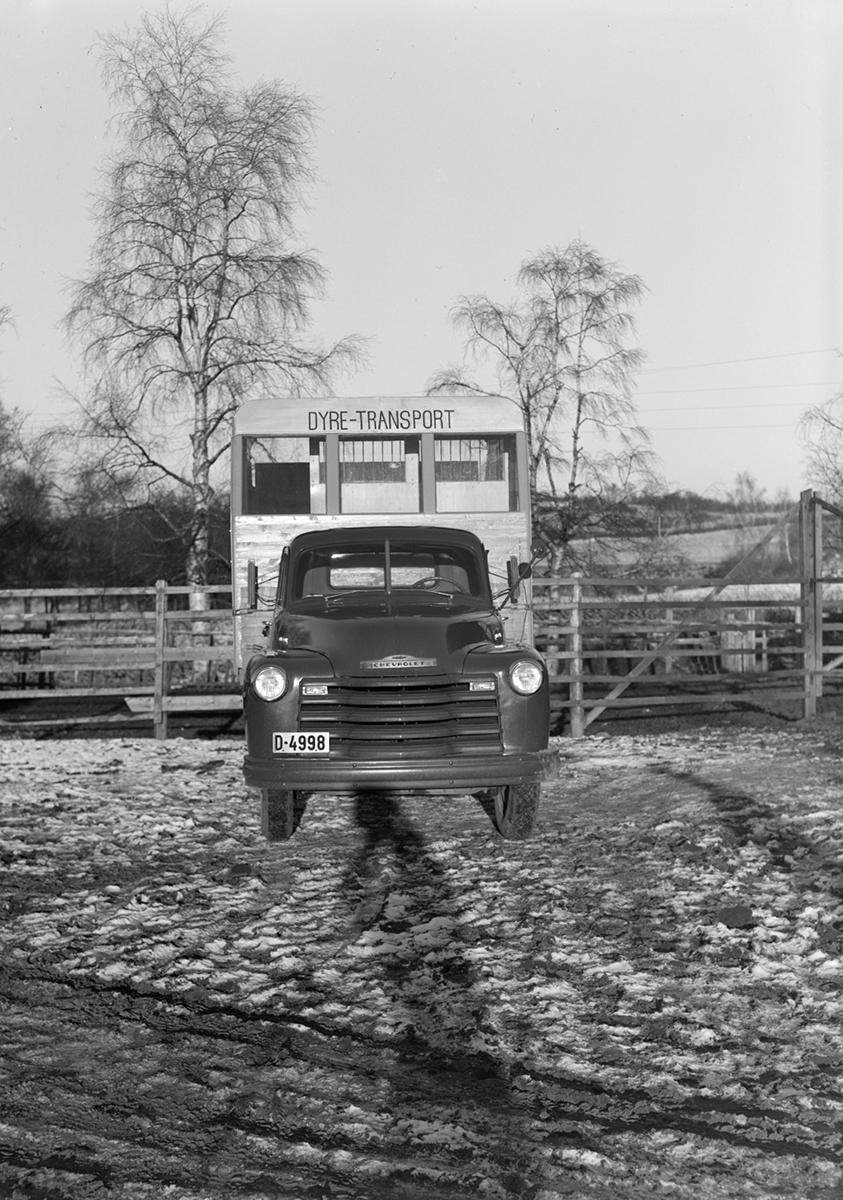 Chevrolet D-4998, lastebil, dyretransport