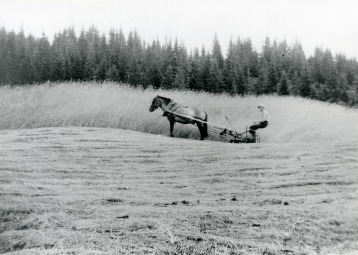 Kolbjørn Brattrud.