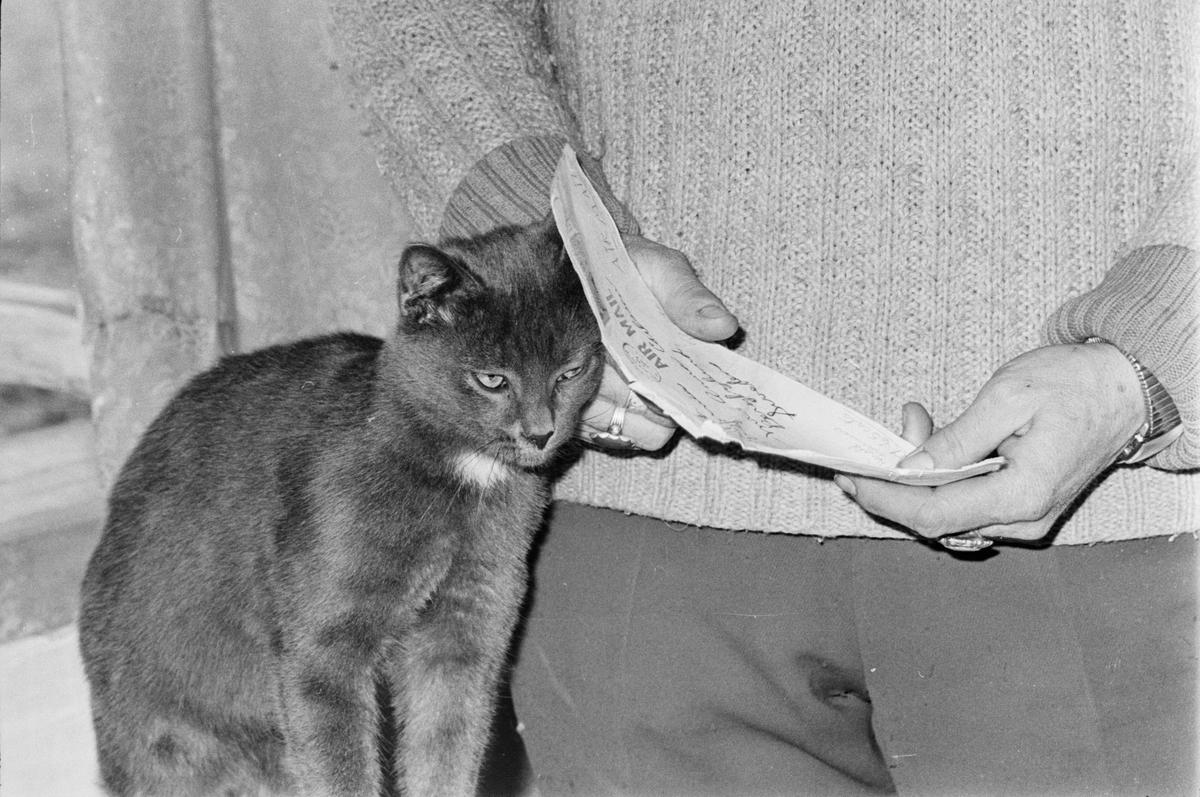 Brev och katt, Riala, april 1967